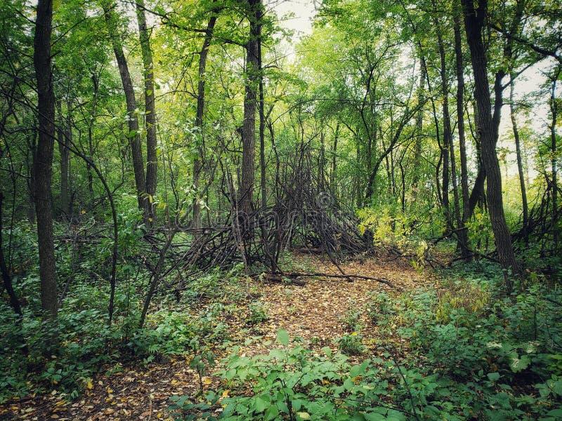 Skogslinga som täckas i stupade sidor royaltyfri foto