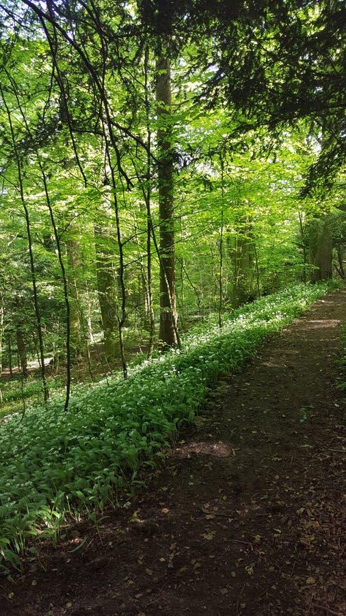 skogsmark royaltyfria foton