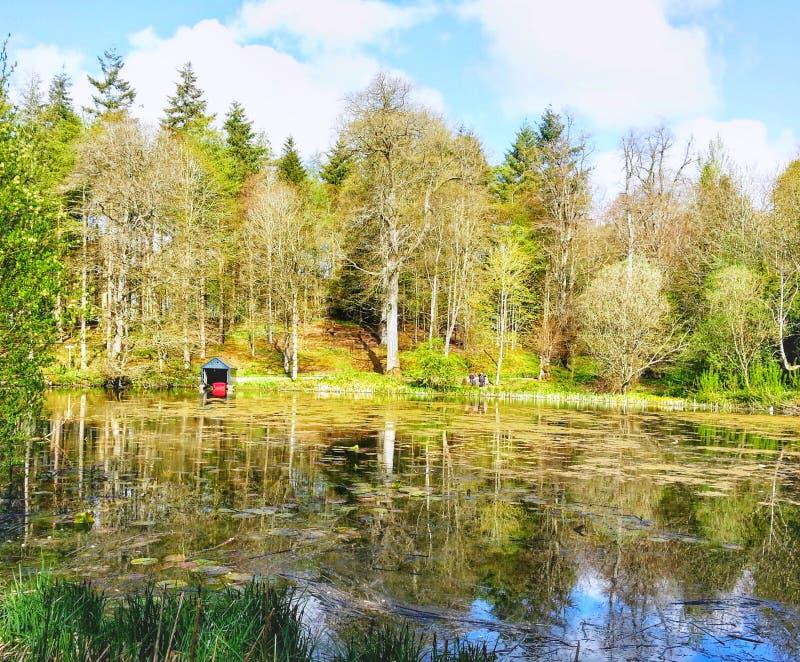 Skogsmark sjö arkivbilder