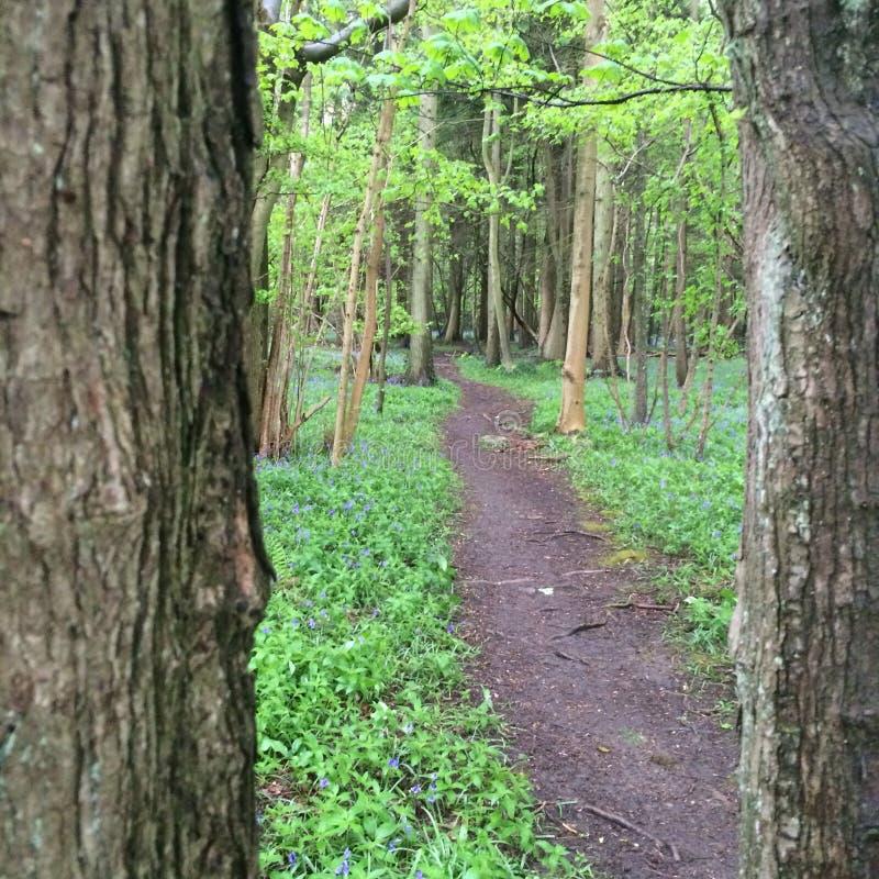 Skogsmarkbana till och med täta träd arkivfoto