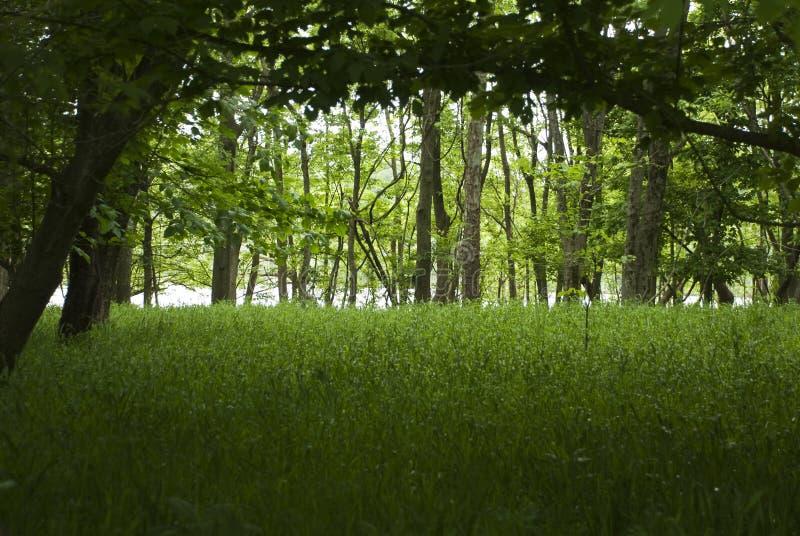 Skogsmarkflodskog på James River royaltyfria foton