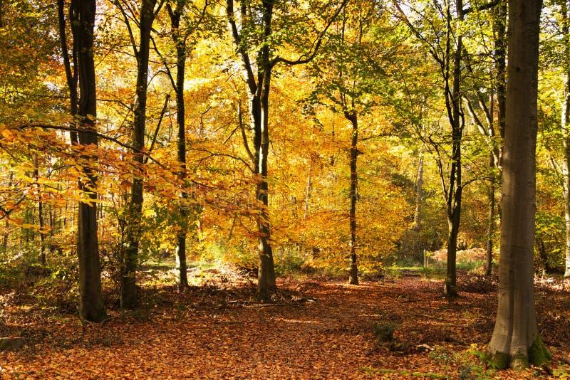 Skogsmarkplats med guling- och brunthöstsidor royaltyfri bild