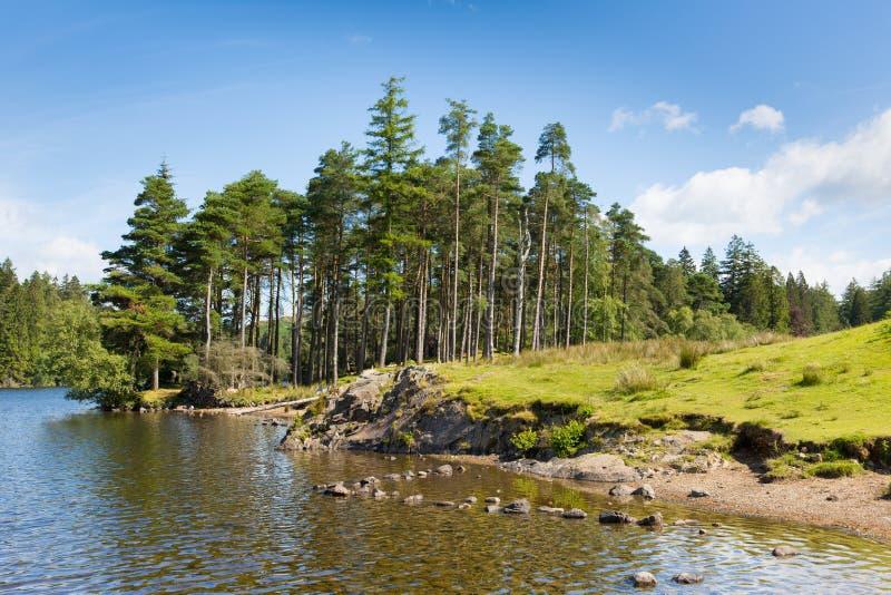 SkogsmarkplatsTarn Hows nationalpark England UK för område för sjö på en härlig solig sommardag fotografering för bildbyråer