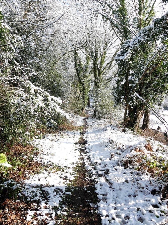 Skogsmarkvandringsled i vintersnö, Chorleywood allmänning, Hertfordshire royaltyfri bild