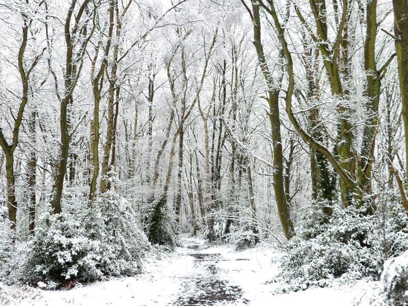 Skogsmarkvandringsled i vintersnö, Chorleywood allmänning, Hertfordshire royaltyfria bilder