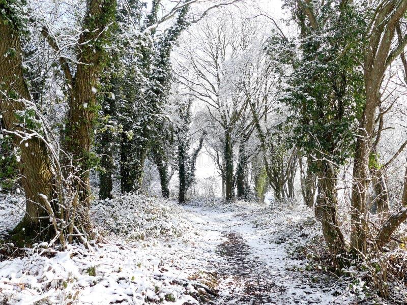 Skogsmarkvandringsled i vintersnö, Chorleywood allmänning, Hertfordshire arkivbild