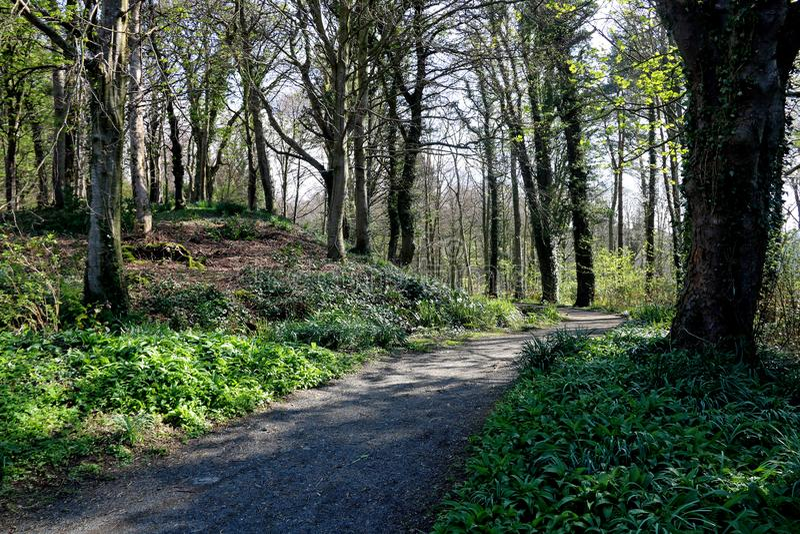 Skogsmarkvandringsled på en vårmorgon arkivbilder