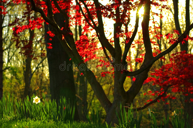 skogsolnedgång royaltyfria foton