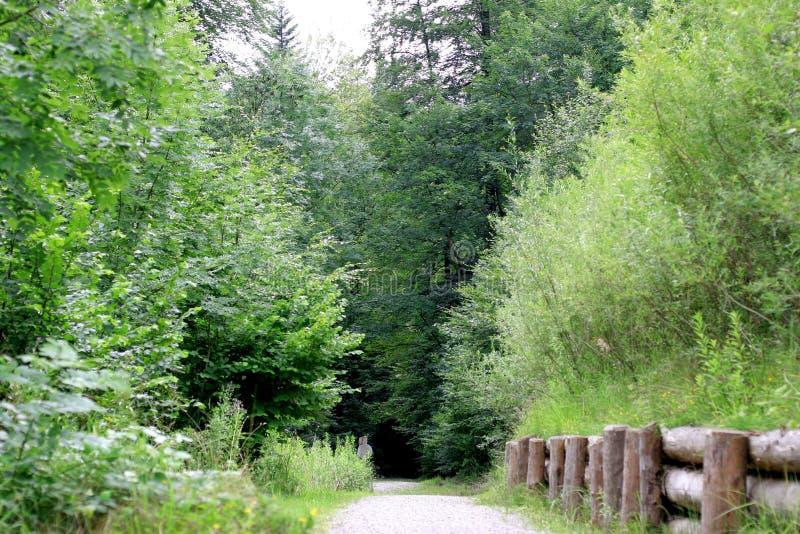 skogspår royaltyfri bild