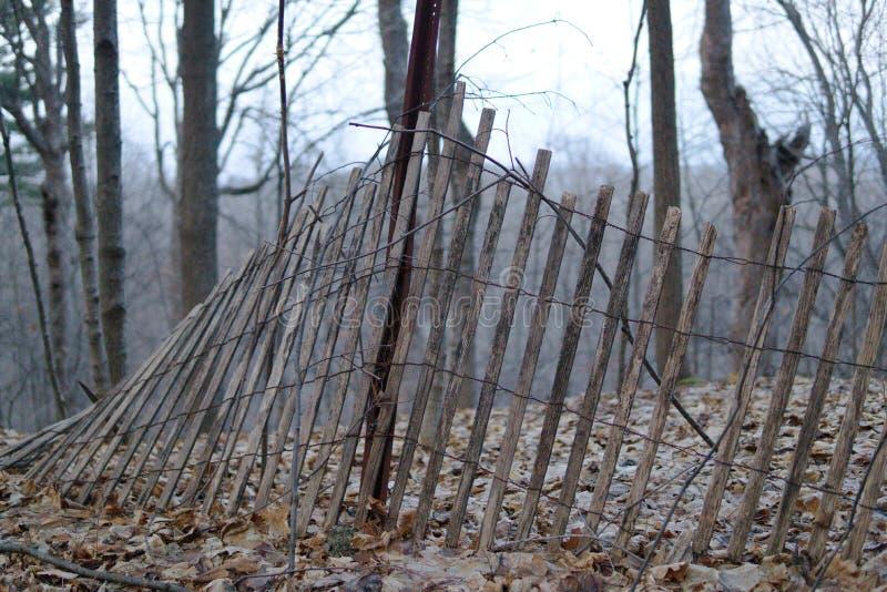 Skogstaket som faller över med träd i bakgrunden fotografering för bildbyråer