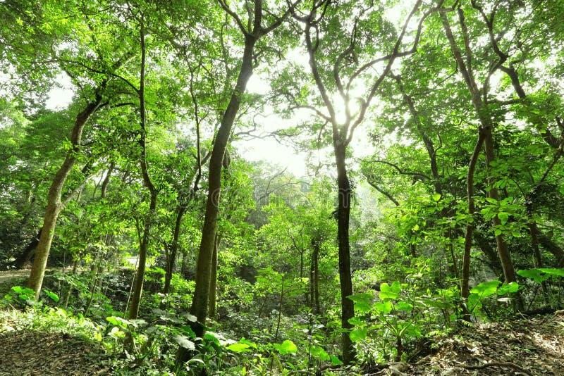 skogstrålsun royaltyfria foton