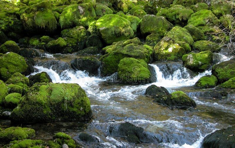 Skogström över gröna mossy rocks. royaltyfria foton