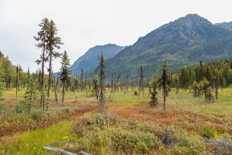 Skogsvy med bergbakgrund i norra BC royaltyfri bild
