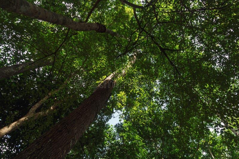 Skogträd i natur med soligt royaltyfri fotografi