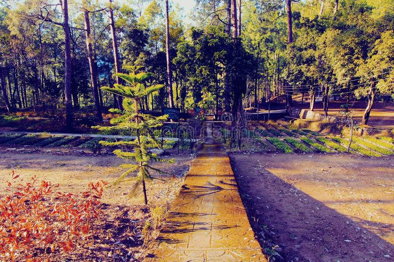 Skogträdgård t Bageshwar Uttarakhand Indien royaltyfri bild