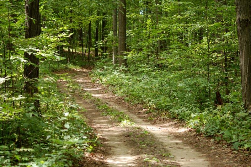 skogtrail arkivbild