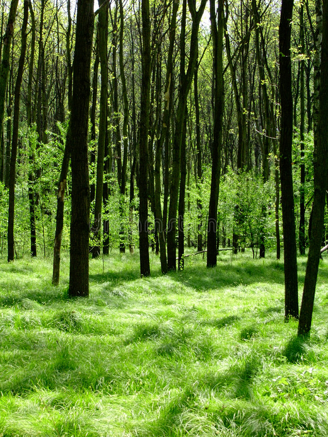 skogtur arkivfoton