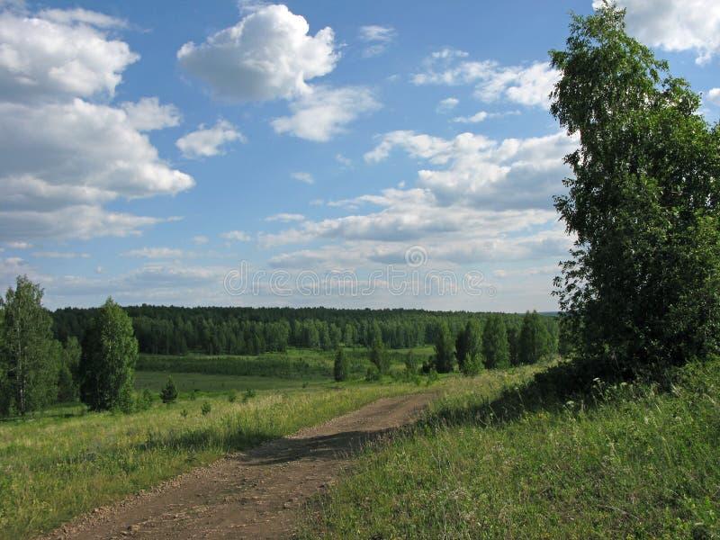 Skogväg. royaltyfri bild