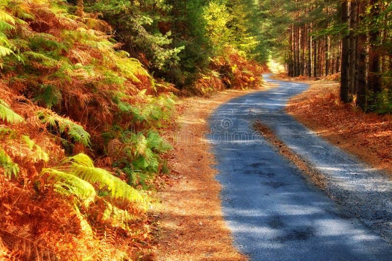 Skogväg i höst arkivfoto