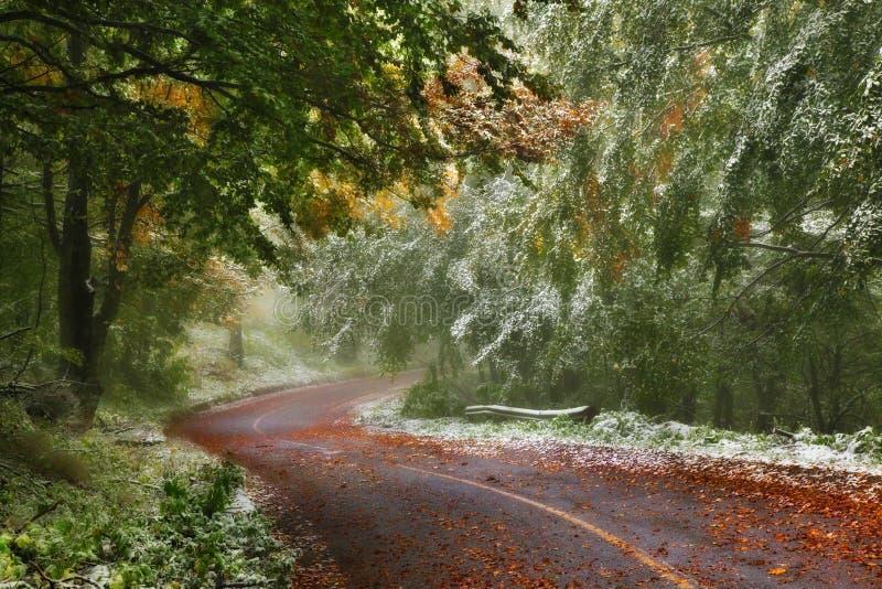 Skogväg i höst royaltyfri foto