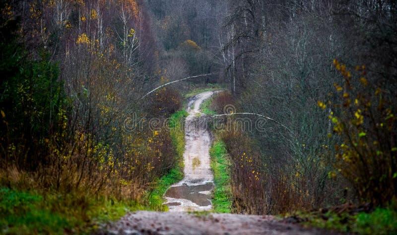 Skogväg i sen nedgång arkivbild