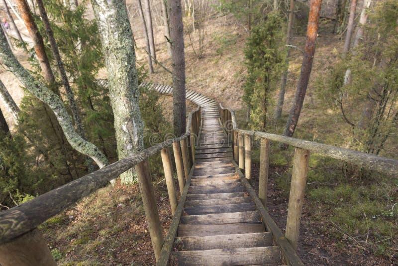 Skogväg ner arkivfoton