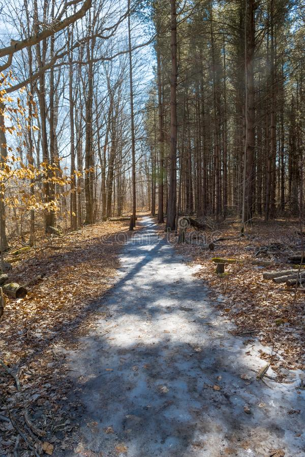 Skogväg som täckas med is i tidig vår arkivbild