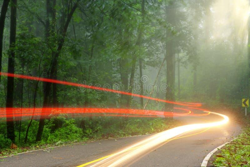 Skogvägen i tidig dimmig morgon med den synliga solen rays royaltyfria bilder