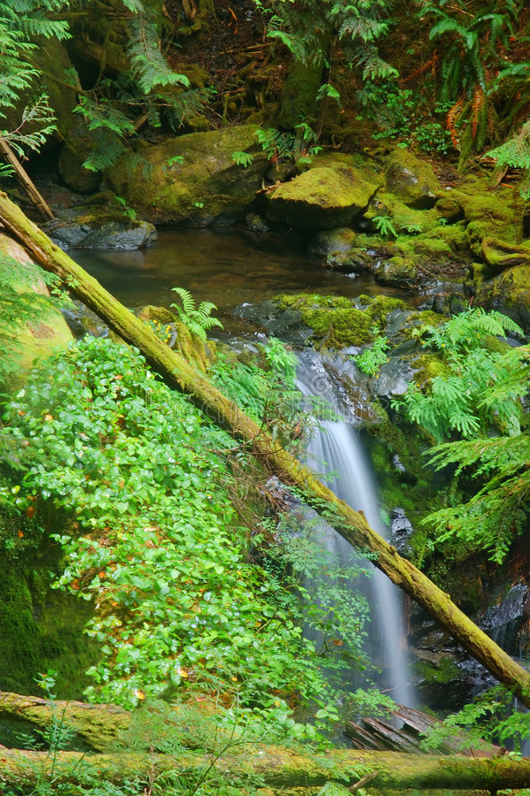 skogvattenfall royaltyfria foton