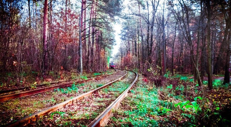 Skogvrå royaltyfria bilder