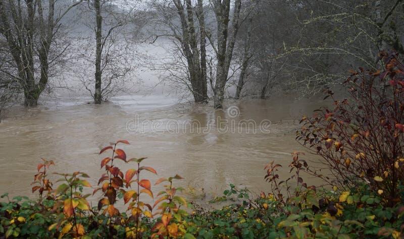 Skokomish从大雨的河洪水 库存照片