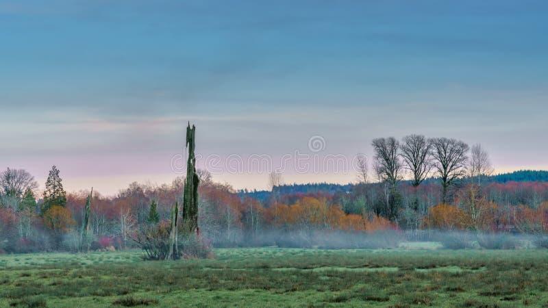 Skokomish doliny późne popołudnie zdjęcia stock