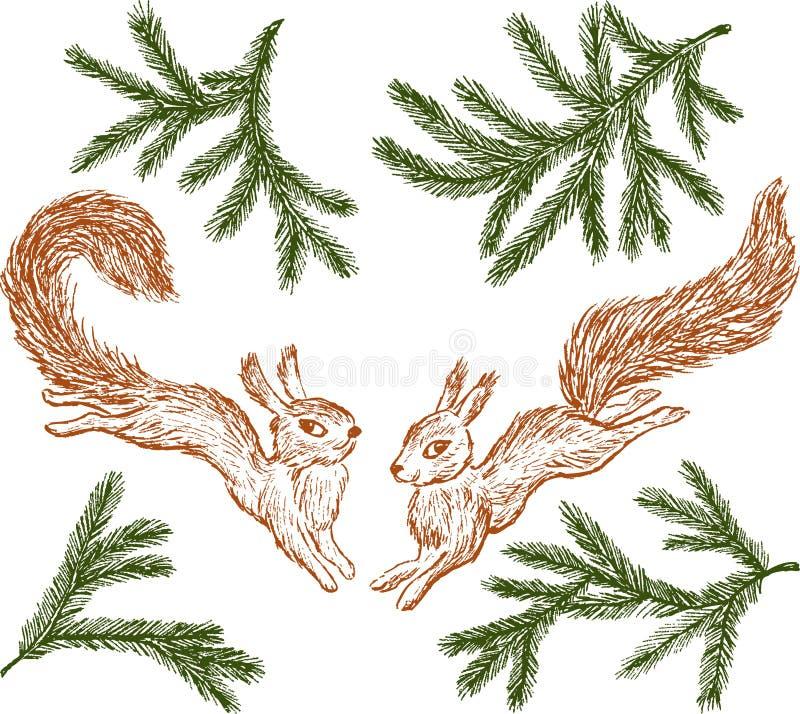Skokowe wiewiórki i jodeł gałąź ilustracja wektor