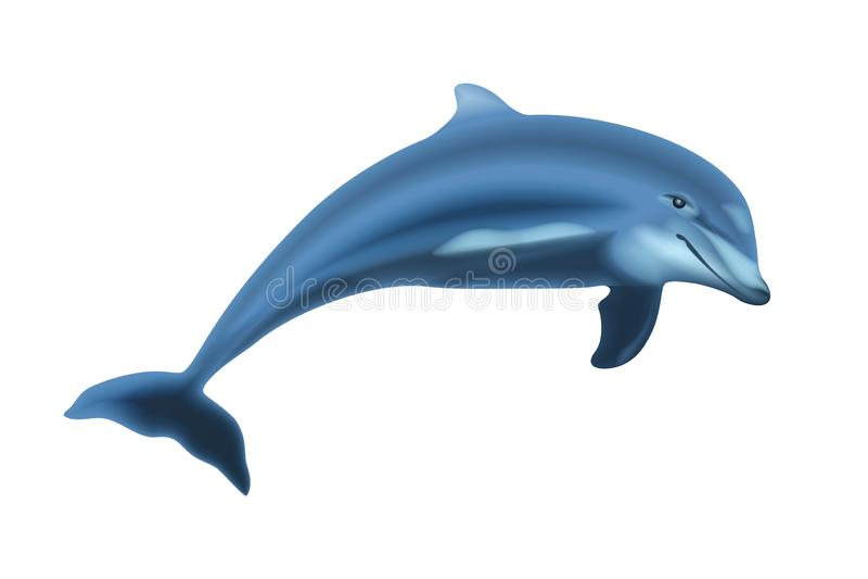 Skokowy delfin Odizolowywający royalty ilustracja