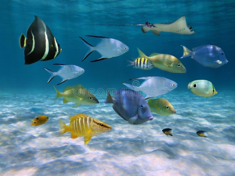 Skola av fisken över ett sandigt havgolv royaltyfri foto