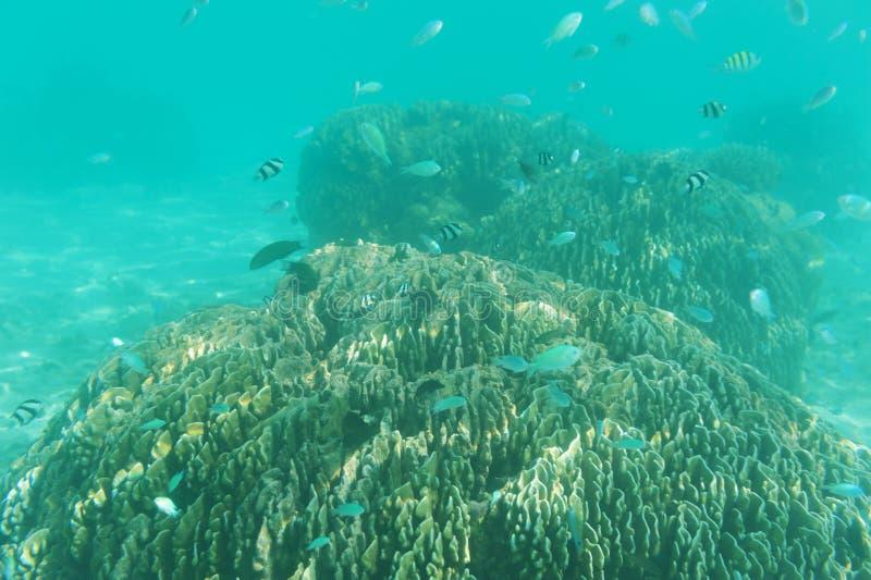 Skola av fisken som simmar nära reven. Undervattens- skott. Marin- liv royaltyfria bilder