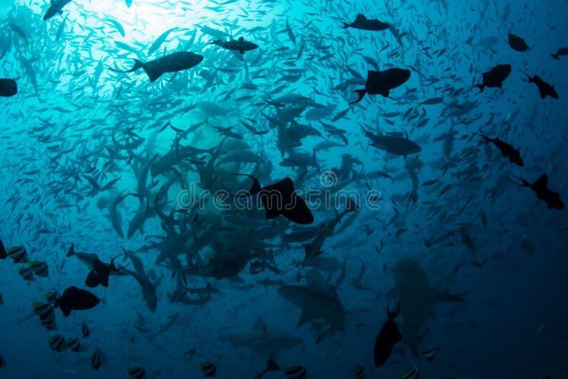 Skola fisken och hajar royaltyfria bilder