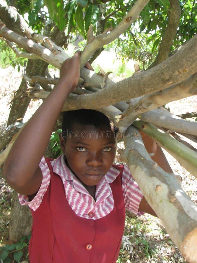 Skola flickan som bär en packe av vedträ i lantliga Zimbabwe royaltyfria foton