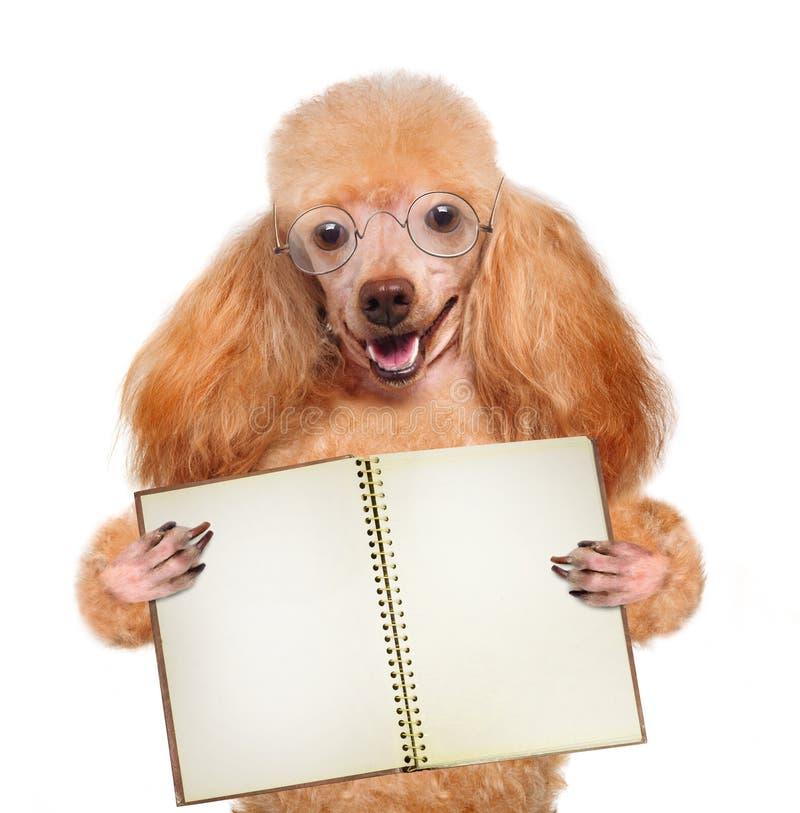 Skolahund med böcker arkivbilder