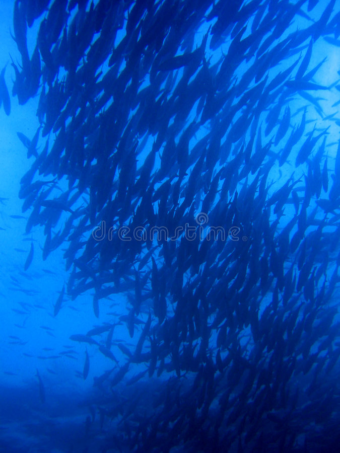 Download Skolatid fotografering för bildbyråer. Bild av undervattens - 504115