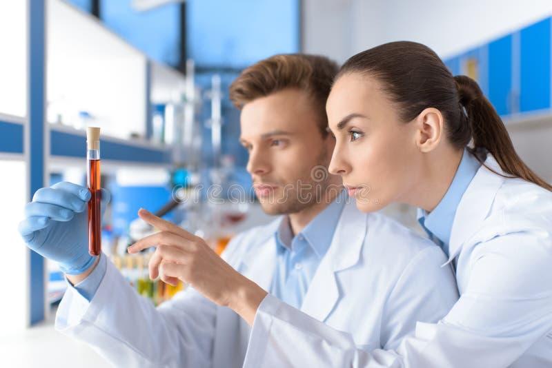 Skoncentrowani naukowowie egzamininuje laboranckiej tubki zdjęcia royalty free