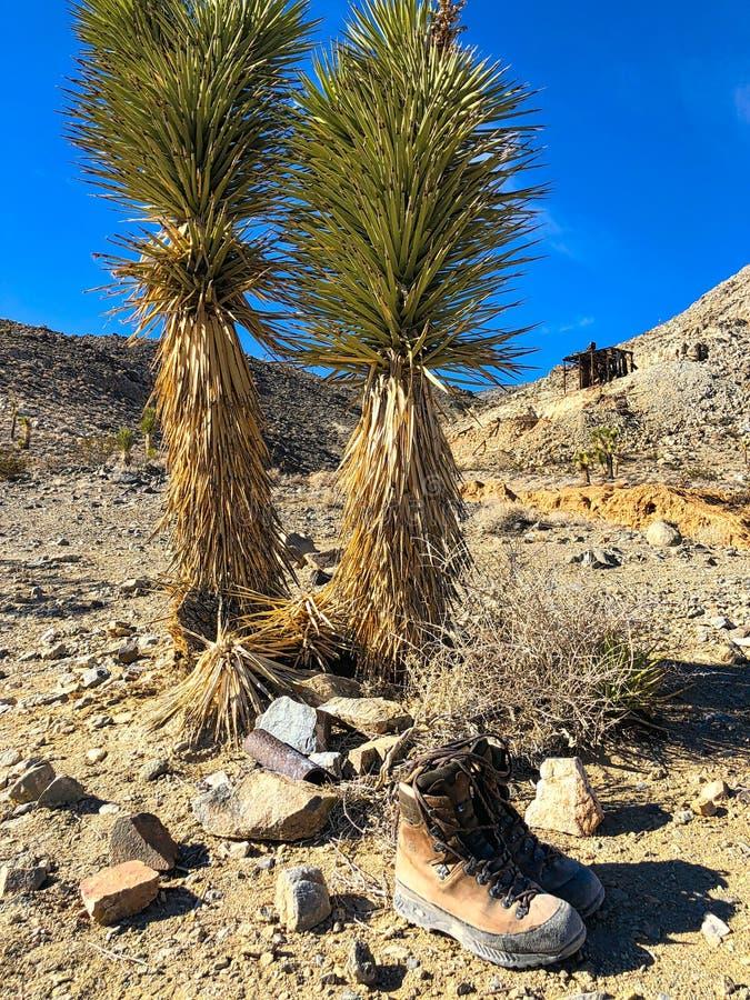 Skor och unga joshua träd på Lost Burrominaen i Death Valley arkivbild