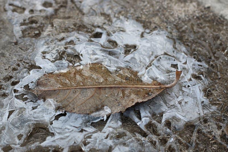 Skorpa av is på en pöl av sidor arkivfoton