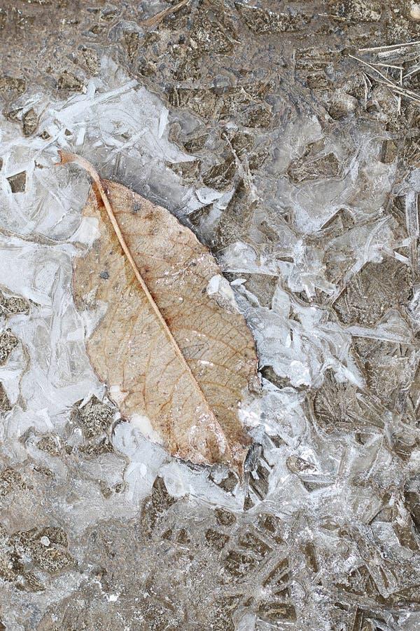 Skorpa av is på en pöl av sidor arkivbilder