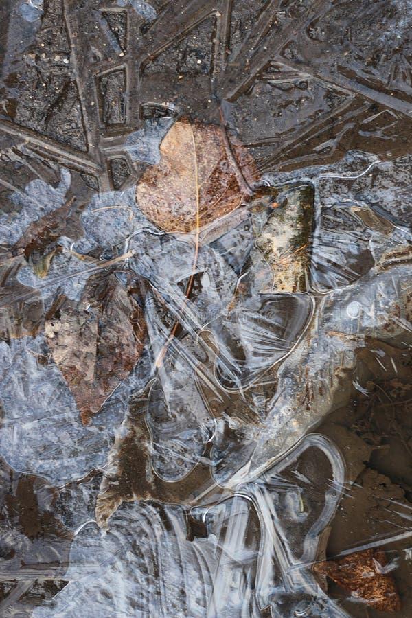 Skorpa av is på en pöl av sidor royaltyfri foto