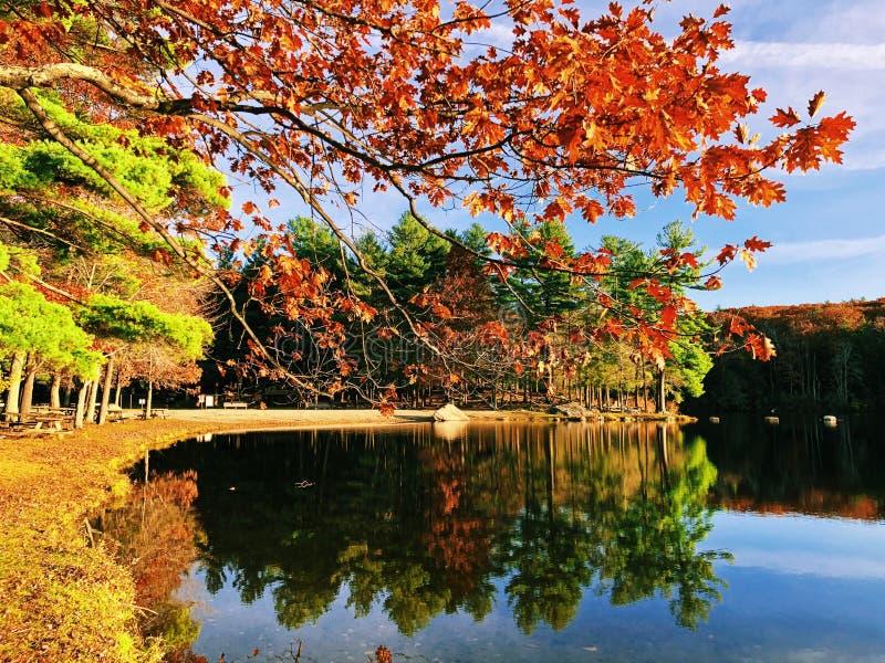 Skorra sikter för sjön för hösten för dammdelstatsparken härliga med orange ekar arkivbilder