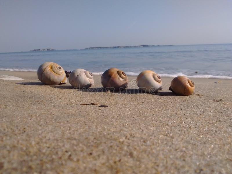 5 skorup ogląda morze fotografia stock