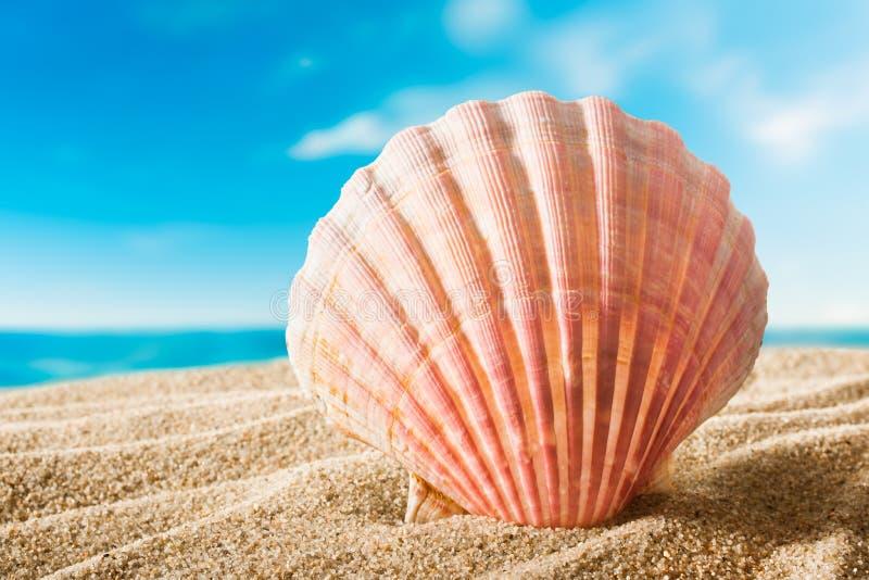 Skorupa na plaży obrazy royalty free