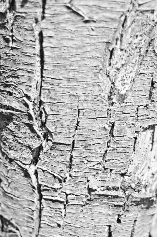 Skorupa pękająca fotografia stock