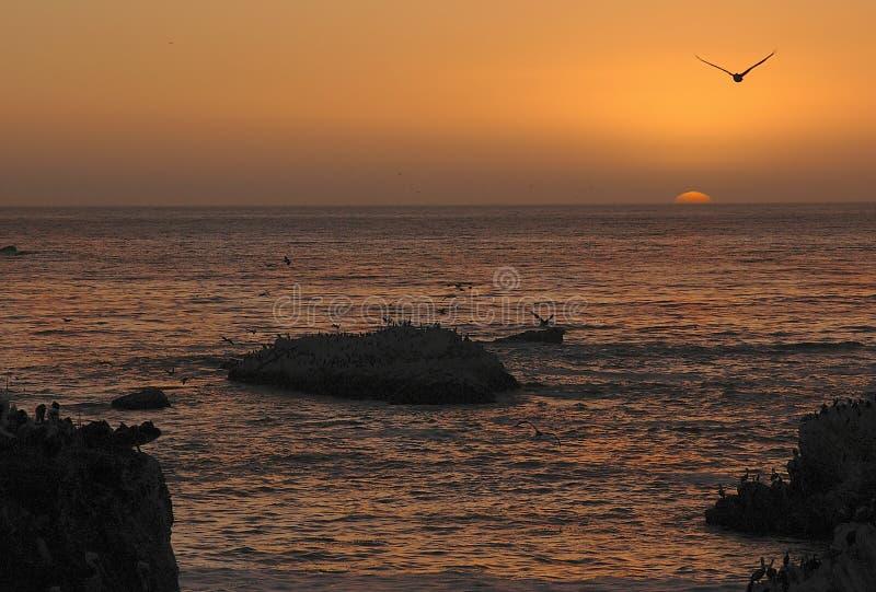 skorupa plażowa zdjęcia stock